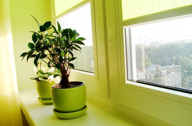 Значение света для комнатных растений