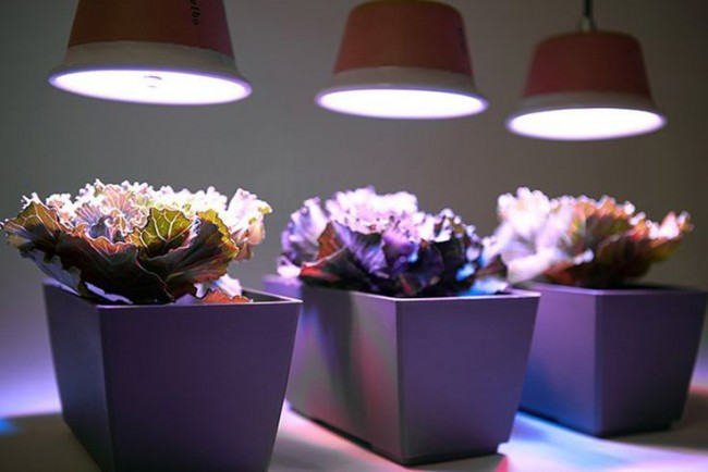 Подсветка для комнатных для растений