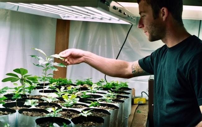 подсветка для комнатных растений в зимний период