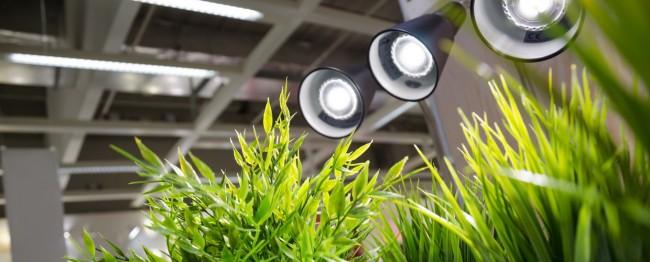 подсветка для растений комнатных