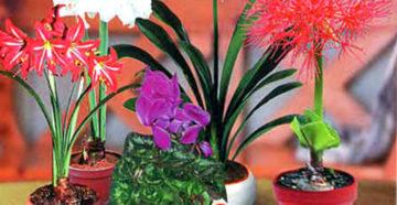 фото луковичных растений