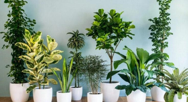 Комнатные растения, не требующие особого ухода