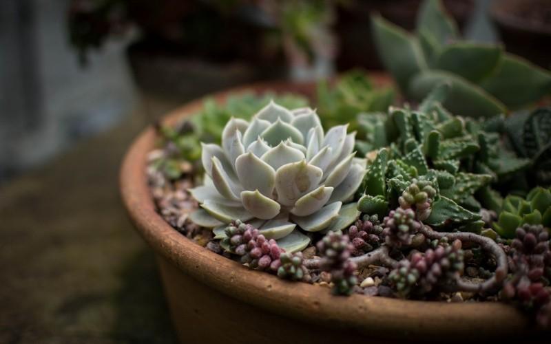 Глинянный горшок для цветов