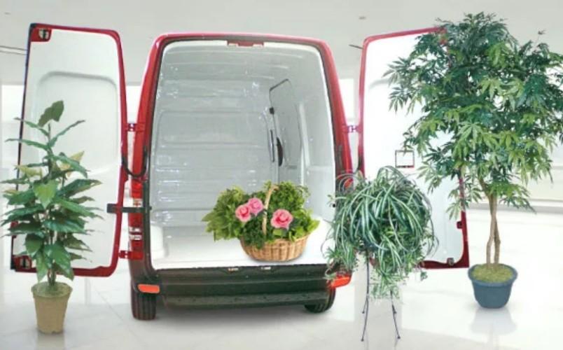 Перевозка домашних растений