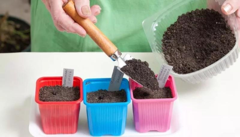 Высаживание ростков в горшки