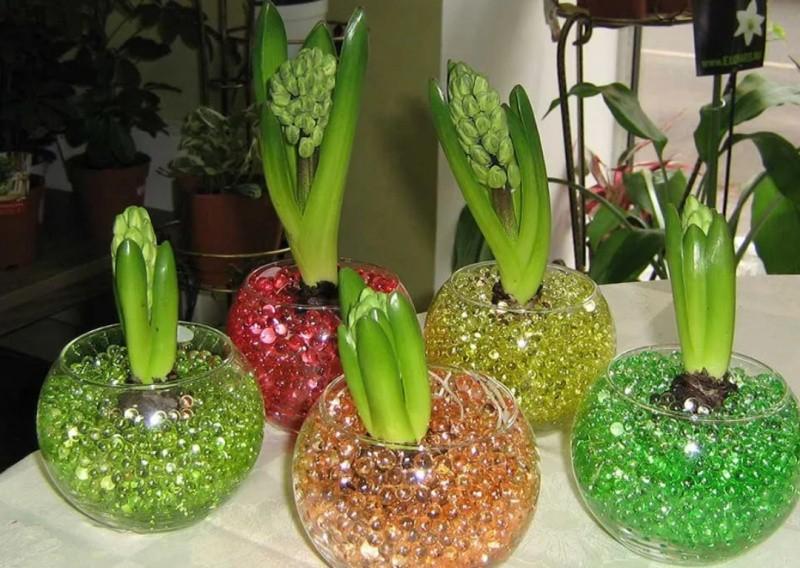 Разноцветный гидрогель для цветов