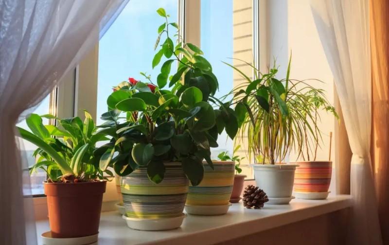 Солнце и комнатные растения