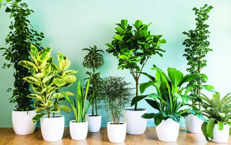 Популярные комнатные растения
