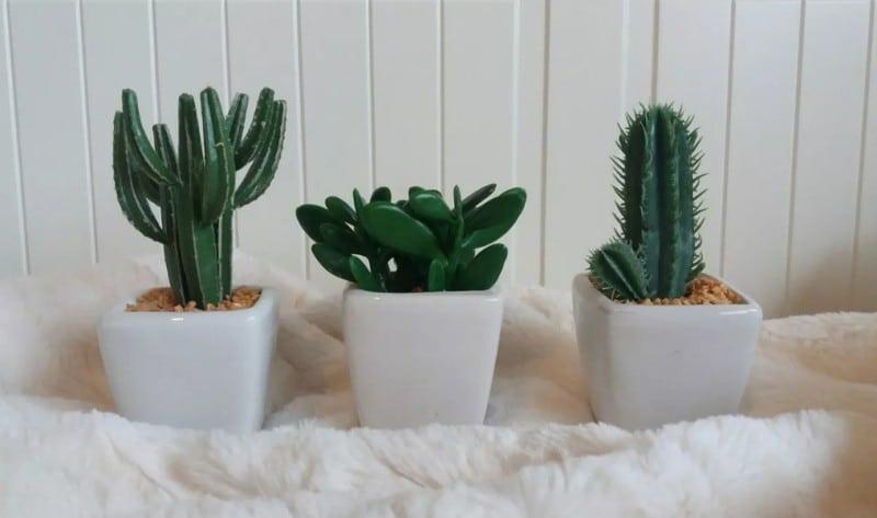 Пустынные кактусы фото