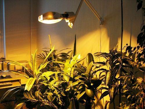 Подсветка для комнатных для растений Источник: file:///C:/Users/user/Downloads/%D0%A1%D0%B0%D0%B9%D1%82%D1%8B/yan-dir.ru/yan-dir.ru/f1/b5/f1b590d42d8bbc4f007a1321dfd84735.html