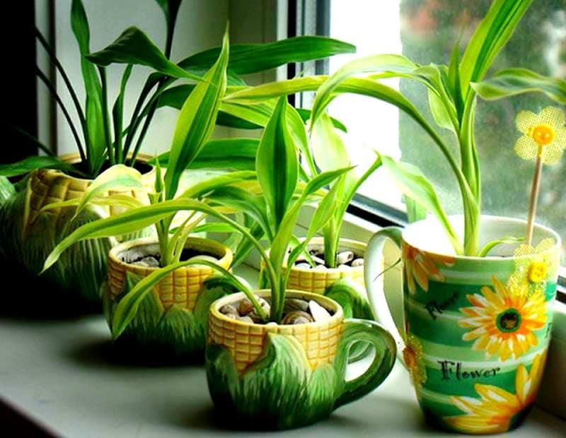 освещение для комнатных растений своими руками