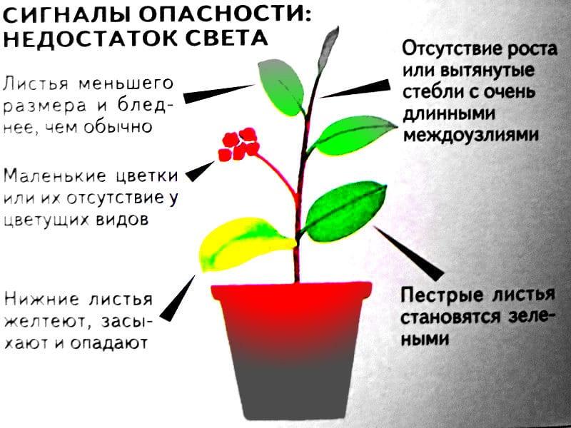 искусственное освещение для комнатных растений 2016