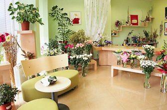 13 комнатных растений