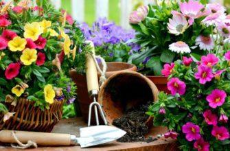 Советы цветоводу