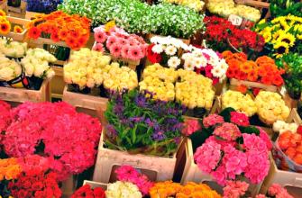 Правила выращивания цветов