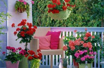 Условия роста балконных растений