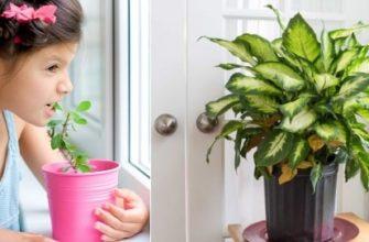 Опасные для малыша комнатные растения