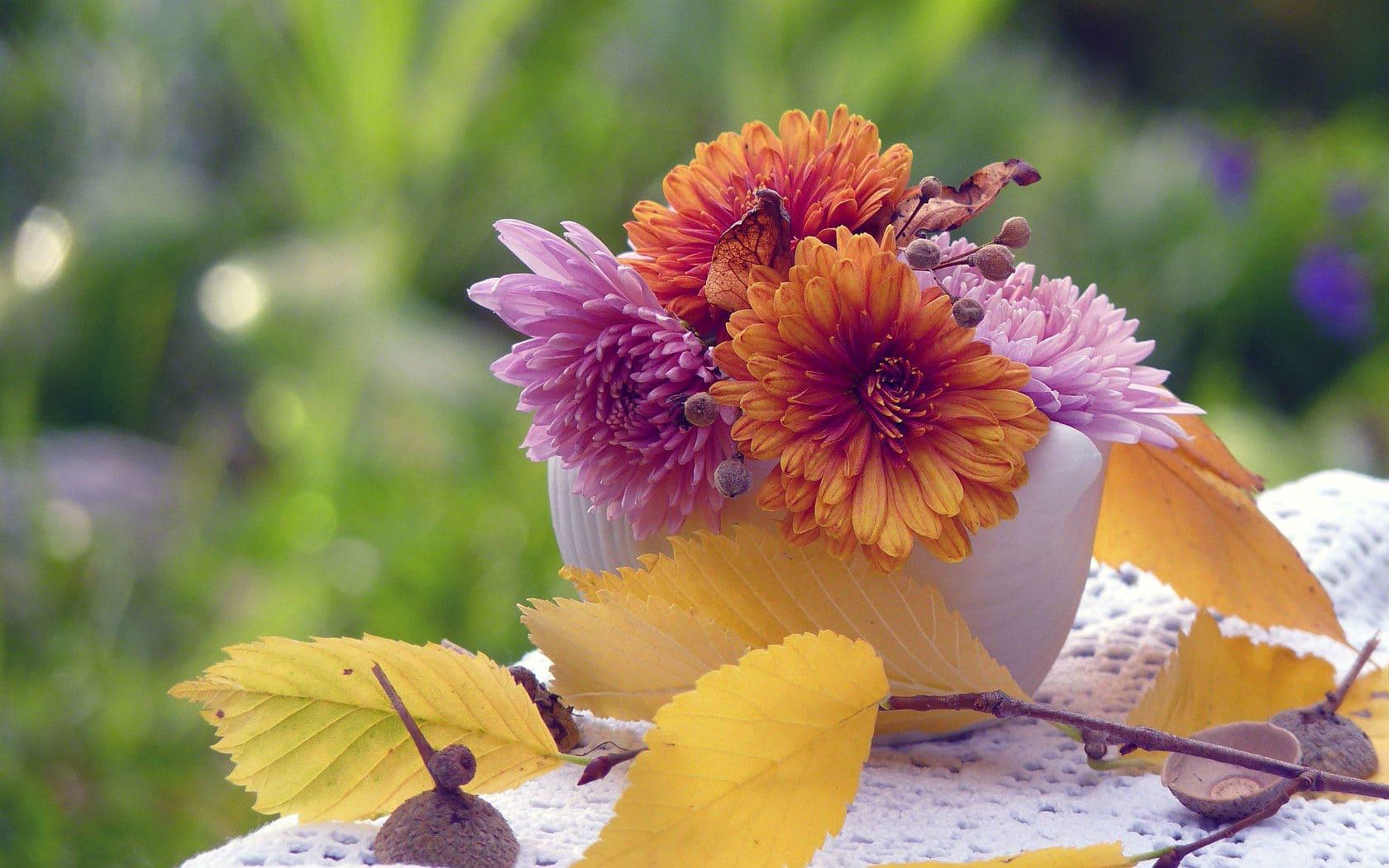 Осенние однолетние цветы