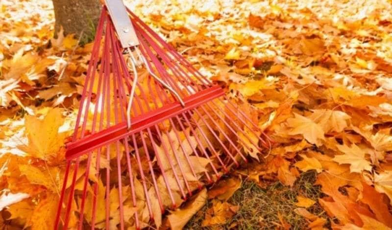 Что делать с опавшими листьями в саду