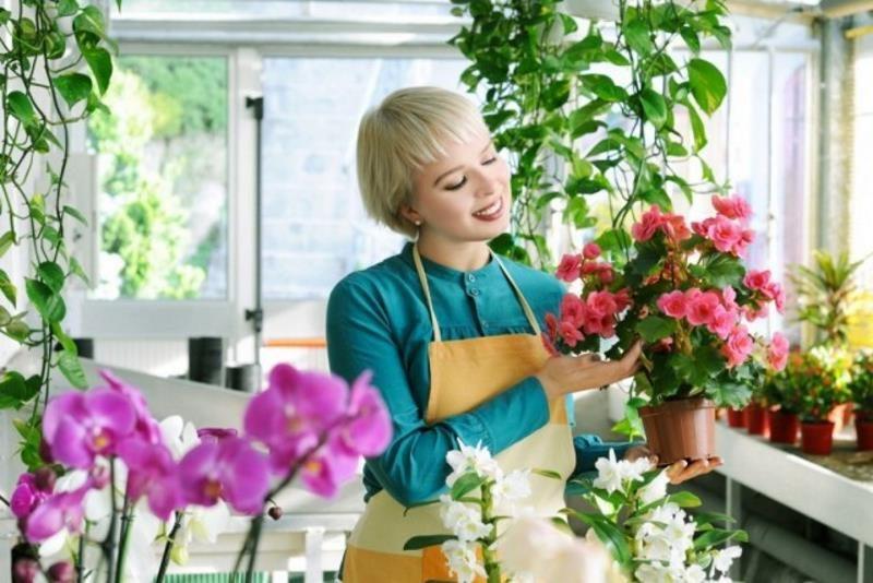 Где покупать комнатные растения