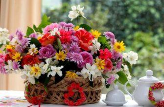 Как выбрать цветы под темперамент человека