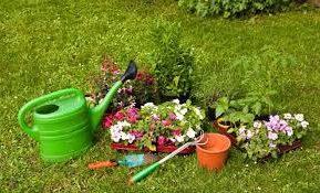 Выкапывание клубниевых растений