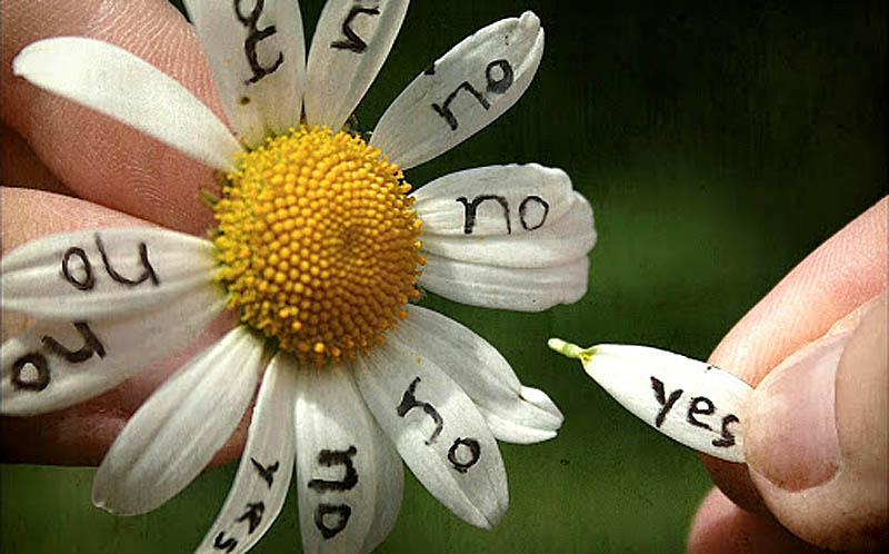 Скажи ромашка: любит или нет