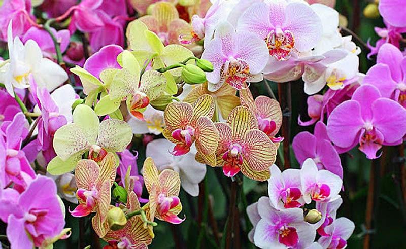 Орхидеи - подарок на День Влюбленных
